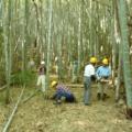 3月7日 竹林つくり1