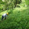 例会2 河東地区法面の除草整備