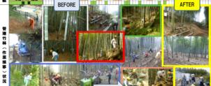 里山化2(竹藪を筍畑へ)