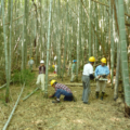 4月19日 竹林つくり1