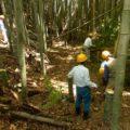 9月21日 (月) 竹林つくり2
