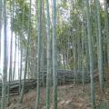 例会1 横山公民館裏竹林整備